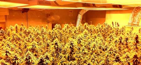 best hps grow lights how to use co2 to increase cannabis yields grow easy