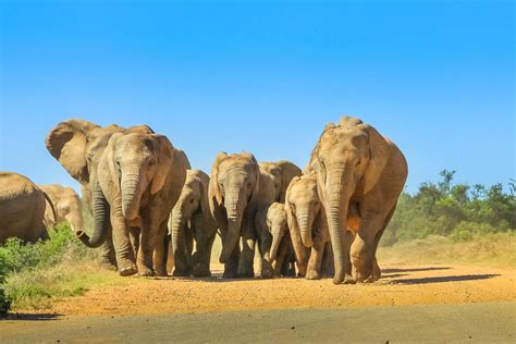 days  south africa  unique itinerary ideas kimkim