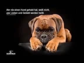 hundesprüche lustig sprüche über hunde doovi