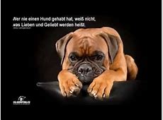Hunde Zitate by wwwdogshootingch YouTube