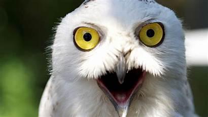 1080p Wallpapers Funny Animal Animals Birds