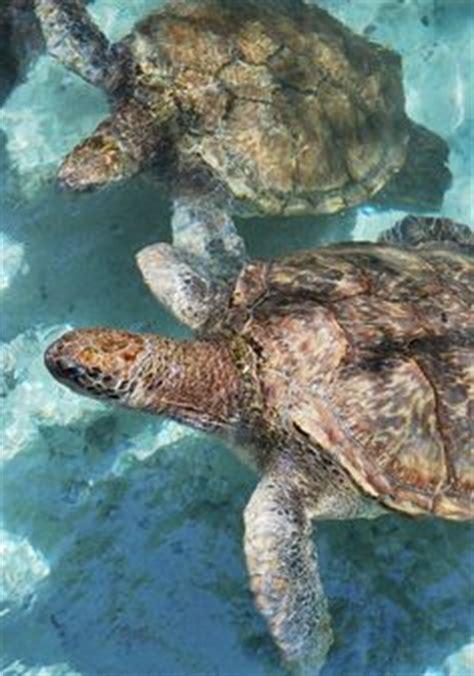 fun  cute sea turtle family  design