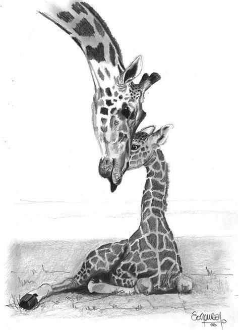 jungleanmalspencildrawings mother giraffe