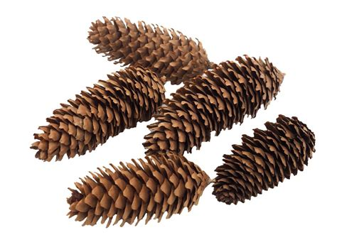 deko weihnachten zapfen 5x zapfen fichtenzapfen weihnachten advent deko