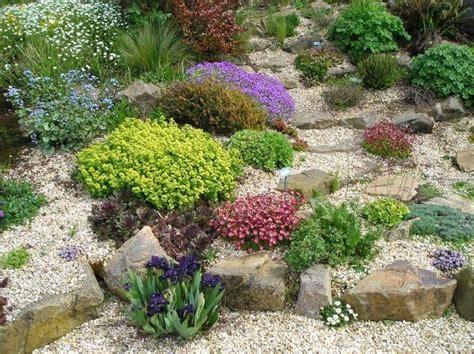 Jardin De Rocaille Avec Sedum, Sempervivum, Aubriète
