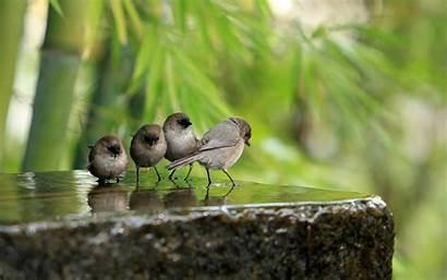 Birds Bird Water Sparrows Definition Stone Wallpapers