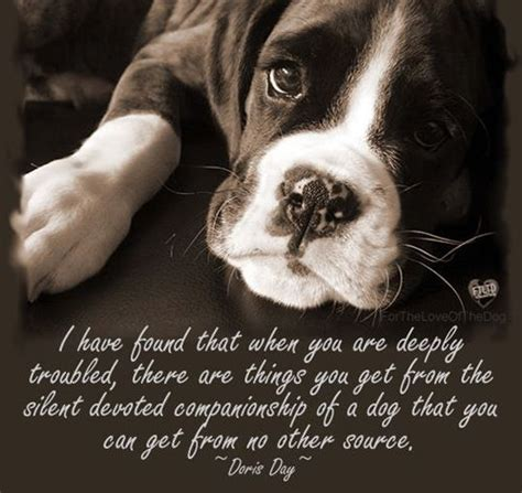 inspirational dog quotes love   obssession