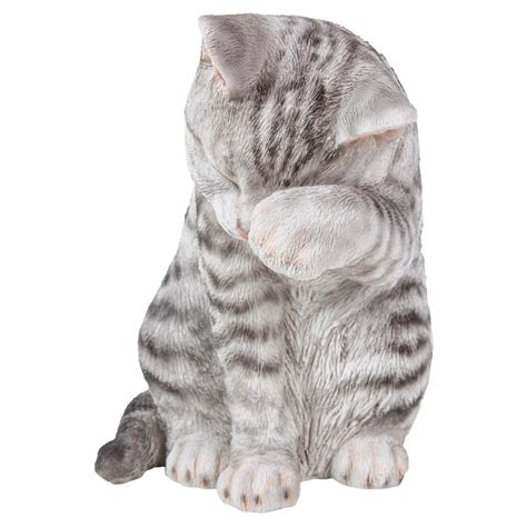 grey tabby cat american shorthair cat  dog lovers