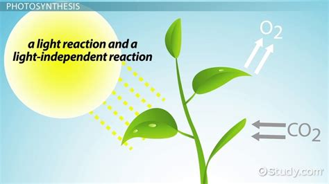 Why Does Darkness Affect The Light Independent Reactions Of Photosynthesis by The Photosynthetic Process Removes From The
