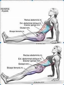Plank Pose Benefits