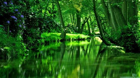 Wallpaper Of Green Forest by Forest Green Wallpapers Wallpaper Cave