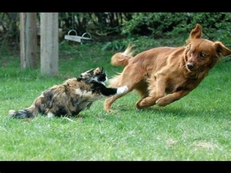 cats  dogs chasing     tails funny