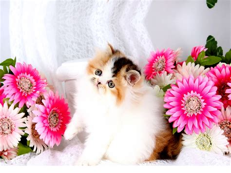Beautiful And Cute Wallpapers