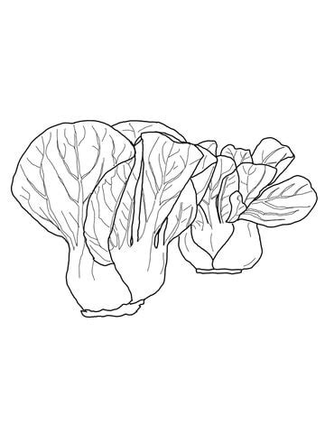 bok choy coloring page  printable coloring pages