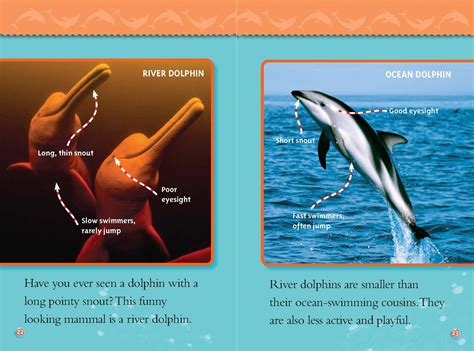 river dolphins  ocean dolphins national geographic