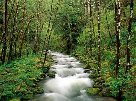 River In Forest  Hd Wallpapers Pulse