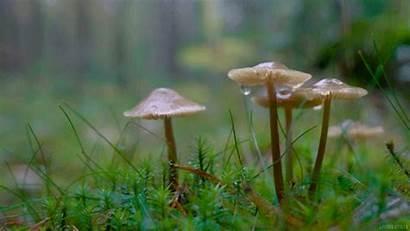 Naturalista Parte2 Filosofia Seedling