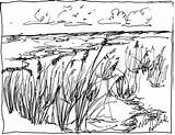 Oats Sea Drawing Asbell Nancy Michele Hollister Drawings Palms 28th November Which Uploaded sketch template