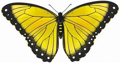 Butterfly Yellow Clipart Transparent Clip Butterflies Monarch
