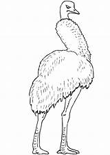 Emu sketch template