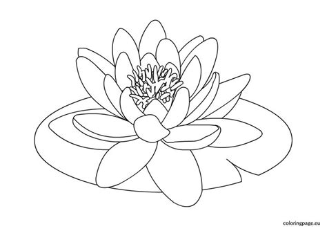 coloring pages  water lilies coloring page