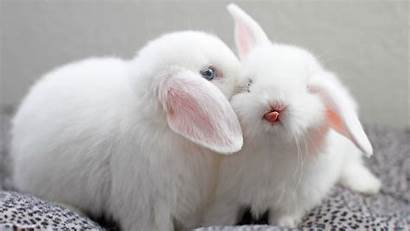 Bunny Wallpapers Bunnies Rabbits Rabbit 1080p Background