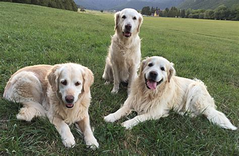 Wirksame Zeckenmittel Für Hunde
