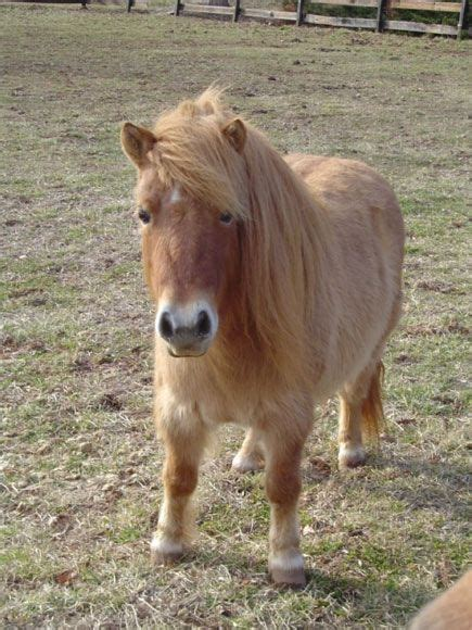 horse miniature mini horses pony expensive ponies cute cus regular supa farm animals story baby pumpkin miniatures every1 gets bag