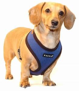 Puppia Soft Dog Harness Sizing Chart Navy Blue Puppia Harness