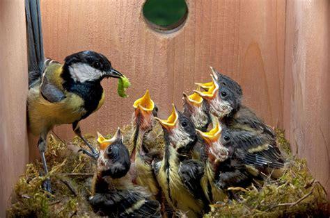 build  nest box   spring birds audubon