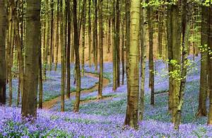 Lilac Floor For... Forest Floor Quotes
