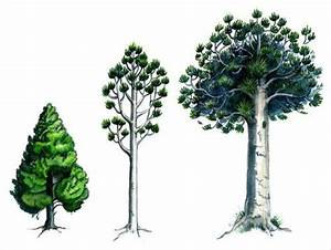 Kauri Tree Takes On Different Forms As It Grows And