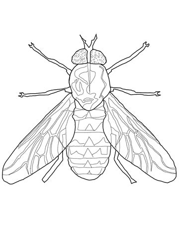 horse fly coloring page supercoloringcom