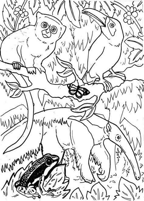 Rainforest Animals Coloring Pages by Brazil Rainforest Animals Coloring Page Coloring Pages