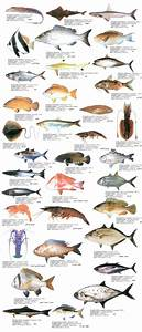 Indian Sea Fish Pictures And Names | www.pixshark.com ...