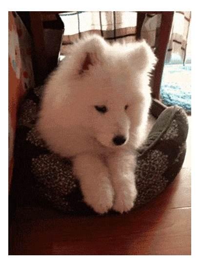 Puppies Proof Much Puppy Eyes Wonderful Dog
