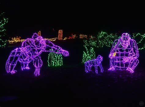 zoo lights seattle woodland park zoo wildlights a roaring time