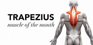 Muscle Of The Month  Trapezius