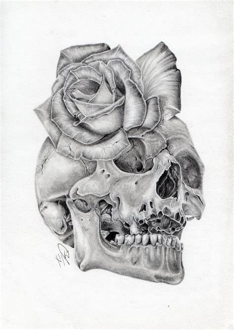 Skull Rose Morph Graphite Pencil Drawing Wazche New