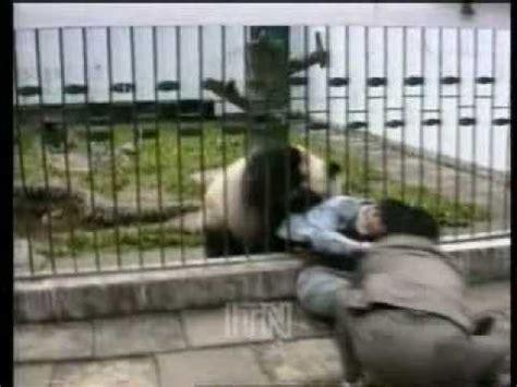 panda attacks tourist youtube