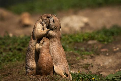 animal families posing  pictures