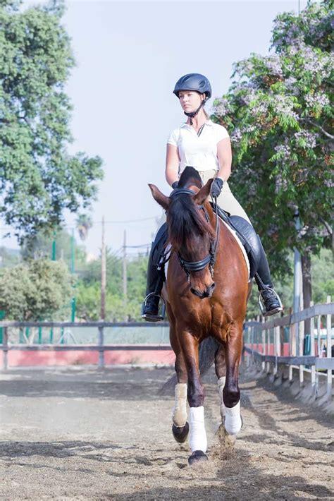 prepurchase horses exams upper level sport exam horse report under