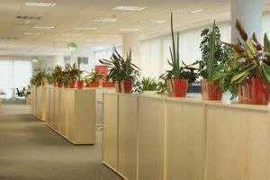 Büro Pflanzen Pflegeleicht : gr npflanzen im b ro lebendige farbtupfer f r ein gutes arbeitsklima human capital care ~ Michelbontemps.com Haus und Dekorationen
