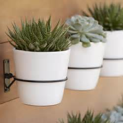 Best Pot Plant For Bathroom by Succulent Wall Planter Home Decorating Trends Homedit