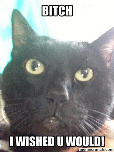 Evil Cat Meme - evil cat