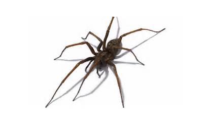 Spider Spiders Grow Summer Bigger Arachnids Head