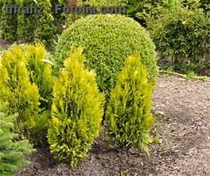 Kokoserde Für Welche Pflanzen : heckenpflanzen welche pflanzen f r die gartenhecke ~ Orissabook.com Haus und Dekorationen