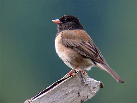 weather radar  track birds  man   phd