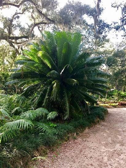 Plants Tropical Florida Trees Palms Thankful Gratitude