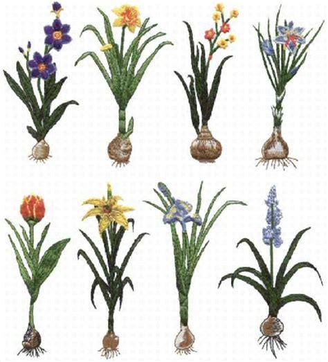 flower bulb planting guide master garden